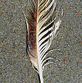 Feather On The Beach by Patricia Januszkiewicz