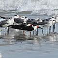 Feathered Friends by Ellen Meakin