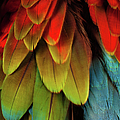 Feathers On A Scarlet Macaw by Tim Platt
