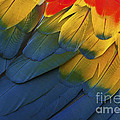Feathery Details... by Nina Stavlund