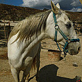 Featured Cute Friend In The Mountain Spain  by Colette V Hera  Guggenheim