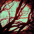 Featured Sun Peaceful Zentree Rest by Colette V Hera  Guggenheim