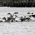 Feeding Frenzy by Linda Kerkau