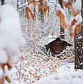 Feeding Site In The Forest In Winter  by Matthias Hauser