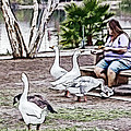 Feeding The Geese by Photographic Art by Russel Ray Photos