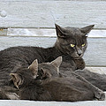 Feeding The Kittens by George Atsametakis