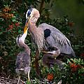 Feeding Time by Barbara Bowen