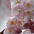 Feelings Of Flowers by Sonali Gangane