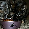 Feline Friends by Susan Herber