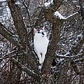 Felis Silvestris Catus In Winter by Theresa Tahara