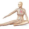 Female Body Sitting In Dynamic Posture by Leonello Calvetti