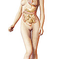 Female Body With Full Endocrine System by Leonello Calvetti