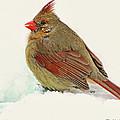 Female Cardinal In Winter II by Debbie Portwood