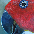 Female Eclectus by Claudia Goodell