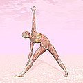 Female Musculature Performing Triangle by Elena Duvernay