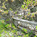 Fence And Beach Shrub by Mother Nature