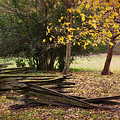 Fence And Tree In Autumn by Amy Jackson