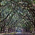Fence And Wormsloe In Savannah  by John McGraw