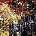 Fence At Woodlawn Cemetery by Sarah Loft