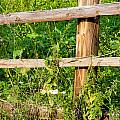 Fence Detail by Alain De Maximy