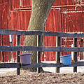 Fence Full Of Buckets by Tracy Winter