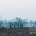 Fence In The Fog by Cheryl Baxter