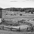 Fence Line Monochrome by Steve Harrington