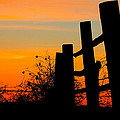 Fence Line with Vibrant Sky