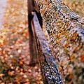 Fence  by Maria Hersch