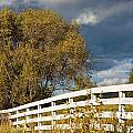 Fence by Michele Wright
