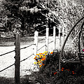 Fence Near The Garden by Julie Hamilton