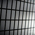 Fence by Olivier Le Queinec