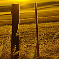 Fence Post In The Morning Light by Jeff Swan