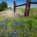 Fence Posts by Mark Alder
