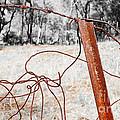 Fence by Steven Ralser
