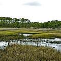 Fence Thru The Marsh by Norman Johnson