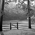Fence by Tony Cordoza