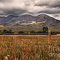 Fence View by Robert Bales