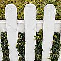 Fence With Hedge by Luis Alvarenga