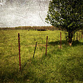 Fence With Tree by Cynthia Lassiter