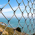 Fenced In Beauty by Doe Nation