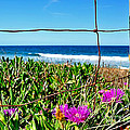 Fenced In by Kaye Menner