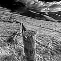 Fenced In by Wayne Sherriff