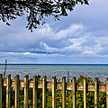 Fenced View by Rachel Cohen