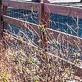 Fenceline 2 by Mechala Matthews