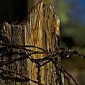 Fenceline 2 by Patrick Moore