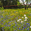Fenceline Wildflowers by Lynn Bauer