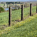 Fences And Dandelions by Kristin Elmquist