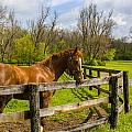 Fences by Jack R Perry