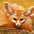 Fennec Fox by Jane Schnetlage